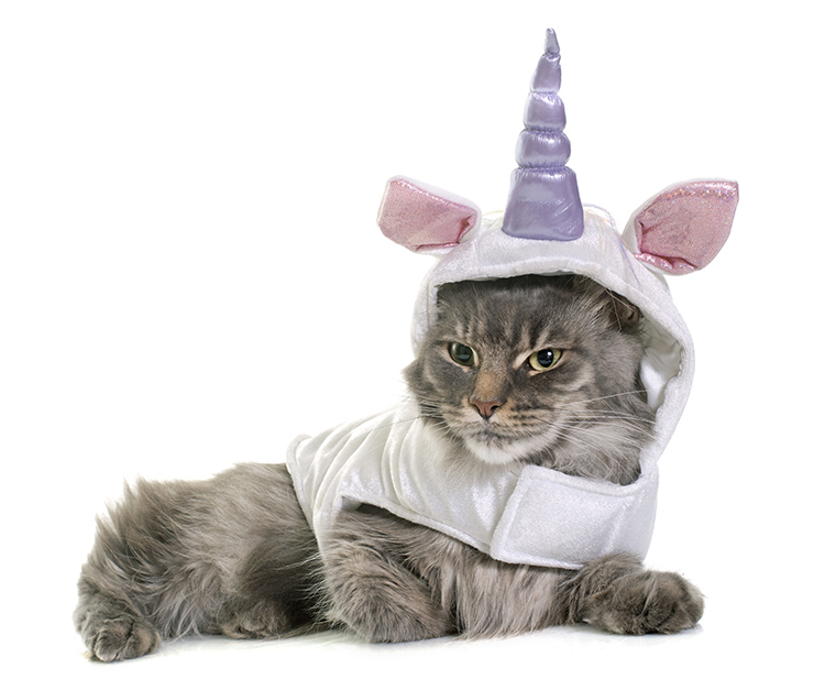 hr consulting services looking for unicorns