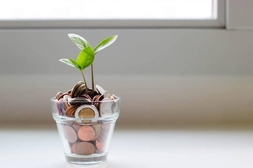 Plant with money